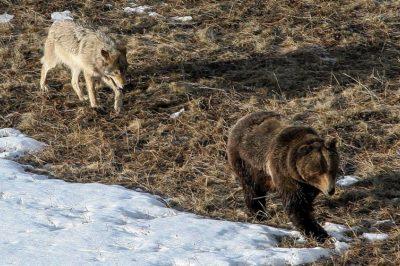 A környezeti bűnözés fenyegeti Európa ikonikus vadvilágát és őserdeit