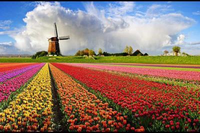 Rendkívül függetlennek tartják magukat a holland bírák