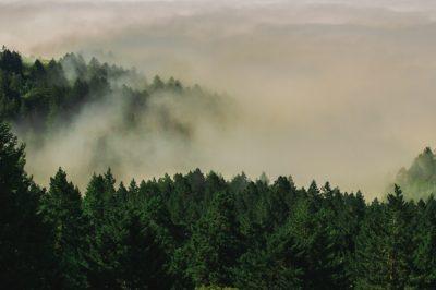 Ilyen előnyökkel jár a módosított erdőtörvény