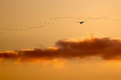 Légi fuvarozó kártalanítási kötelezettsége