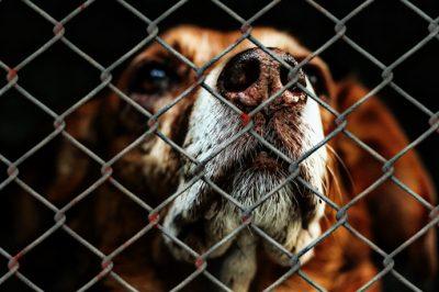 Megfelelően védi-e a magyar jogrendszer az állatokat?