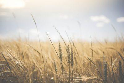 Több törvény segíti a magyar gazdák munkáját – közölte Agrárminisztérium