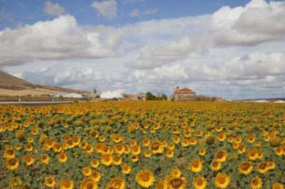 A termőföldszerzés illetékmentességét és annak ellenőrzését szabályozta a NAV