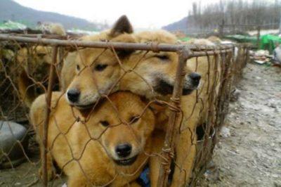 A rossz bánásmódtól a kínzásig - Az FT ítélkezési gyakorlata az állatok védelmében