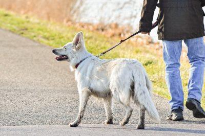 Komolyabban vennék a kutyák jogait Németországban - Napi kétszeri sétáltatásra kötelezhetik a kutyatartókat