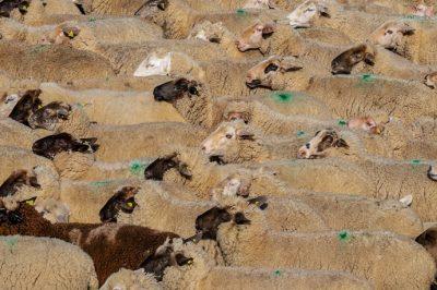 Közérthetően az uniós állatjóléti és állatvédelmi szabályokról