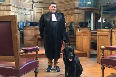 Kutyákkal segítenék egy francia bíróságon a bántalmazások áldozatait