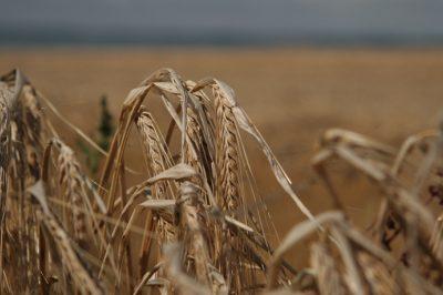 Két évvel elhalasztják az új Közös Agrárpolitikai Szabályok (KAP) bevezetését
