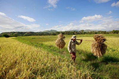 KORONAVÍRUS - Illúzió az elbocsátott munkaerő tömeges mezőgazdasági alkalmazása - állítja egy szakmai forrás