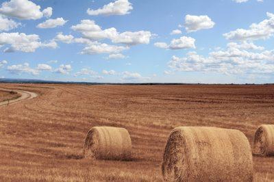Törvény rendezi az osztatlan közös földtulajdon felszámolását